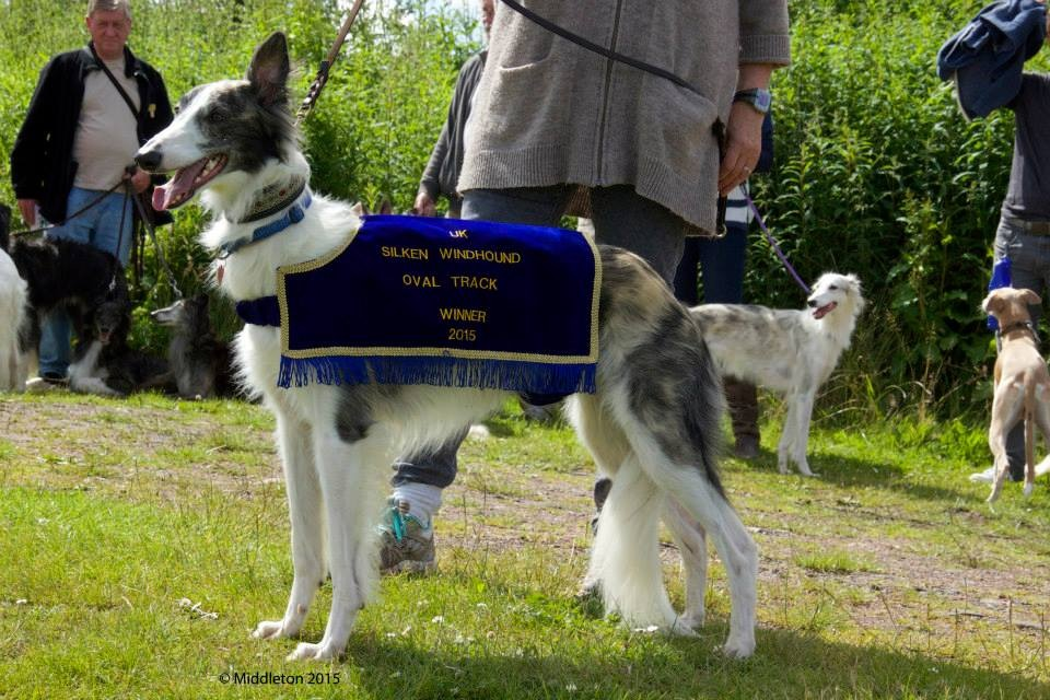 Beaux in his winning jacket - Fastest Dog at UKSWC Track Event 2015
