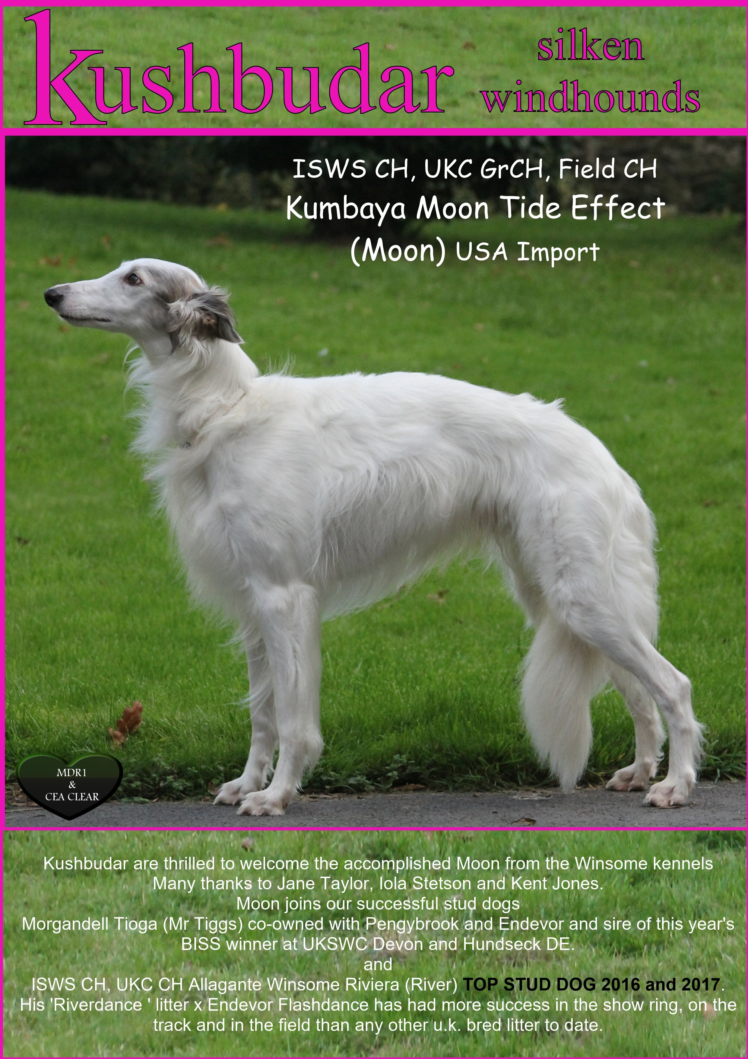Our 2018 Our Dogs advert introducing our lovely Moon from America
