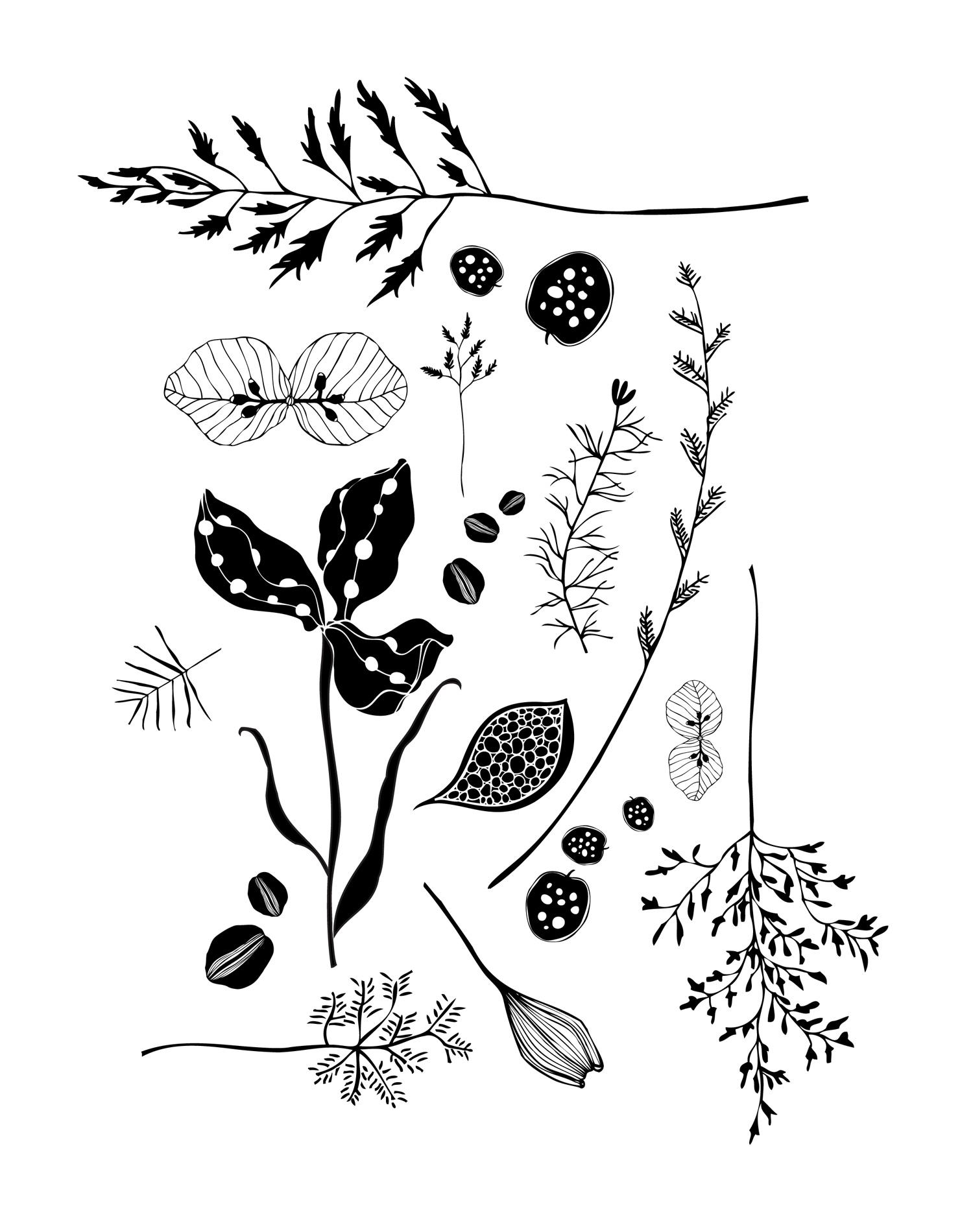 Flora 1 - Laurie Baars