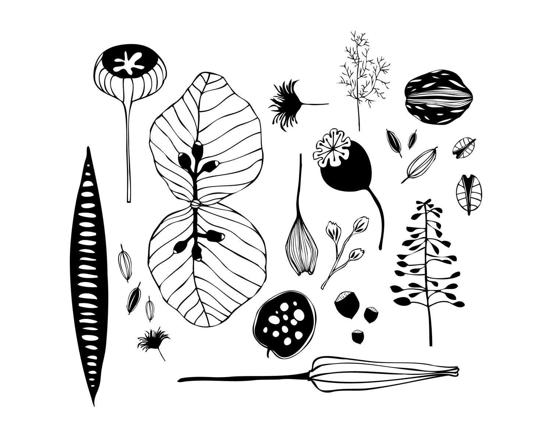 Flora 2 - Laurie Baars