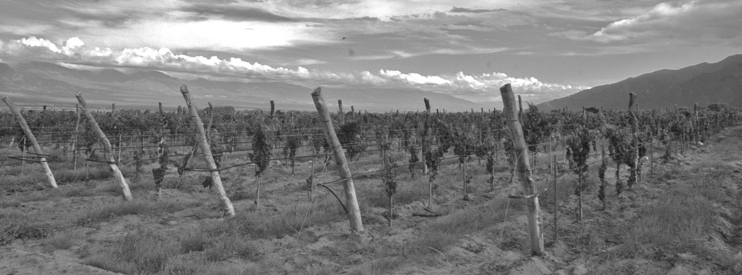 capital wine  469.jpg
