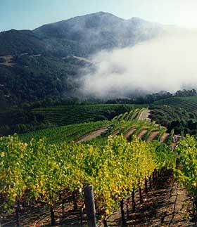 View from Robert Craig vineyards.
