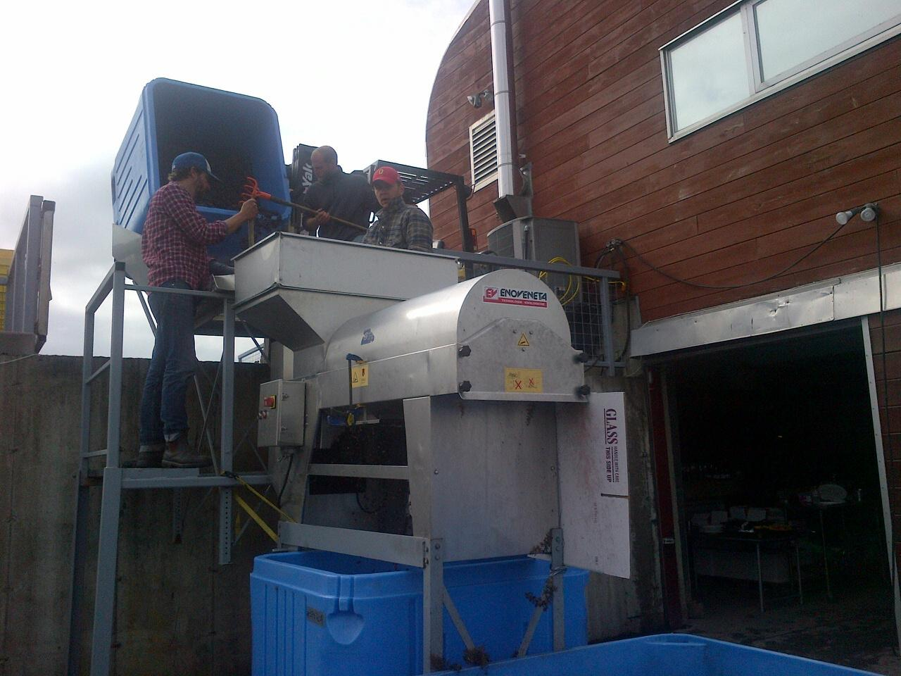 Bringing the Pinot Noir into the de-stemmer, getting set for some rosé!