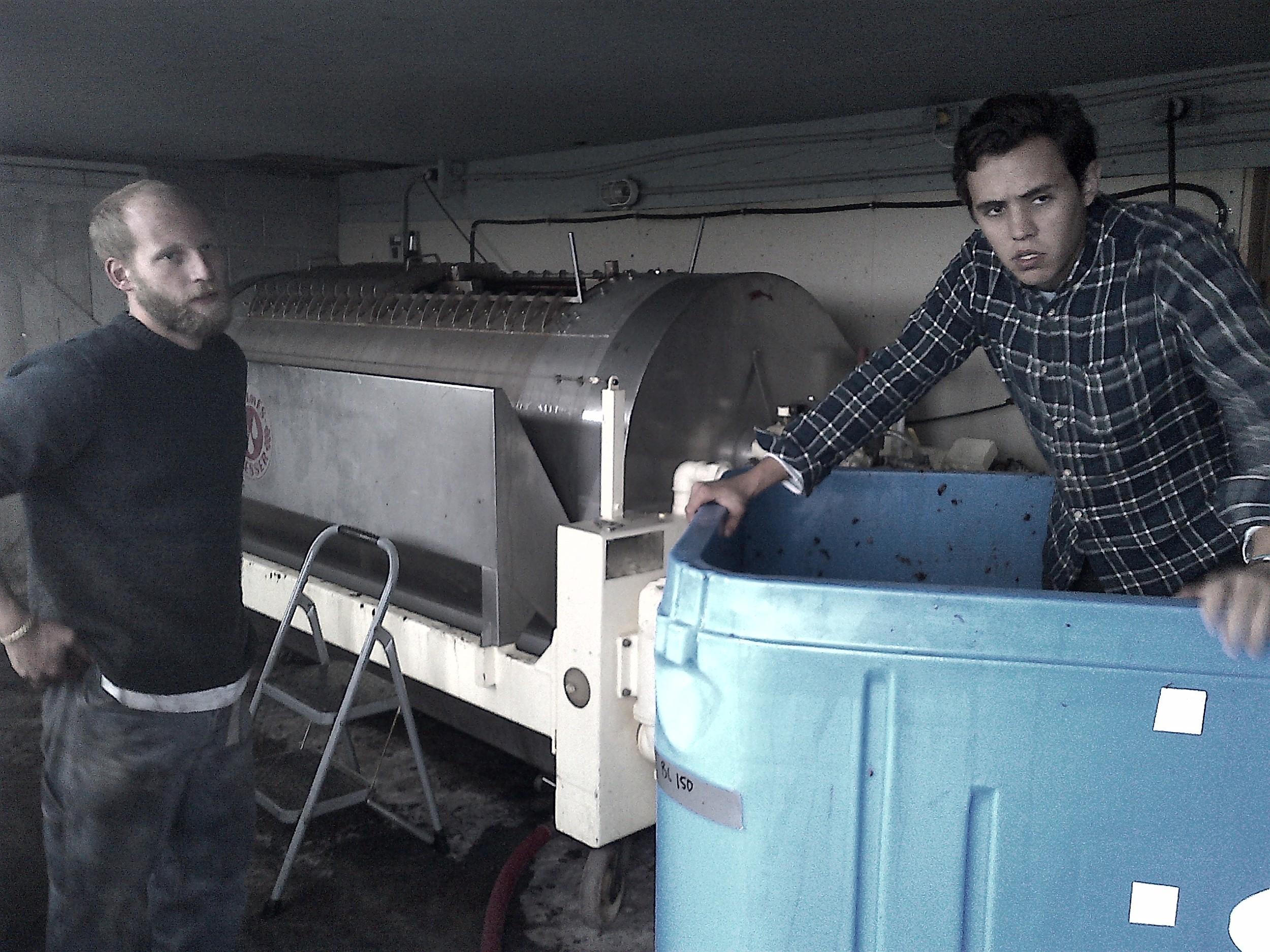 Assistant winemaker Richard with Sukko from Origin Liberty restaurant in Toronto, emptying the fermenter into Hinterland's horizontal tank press...