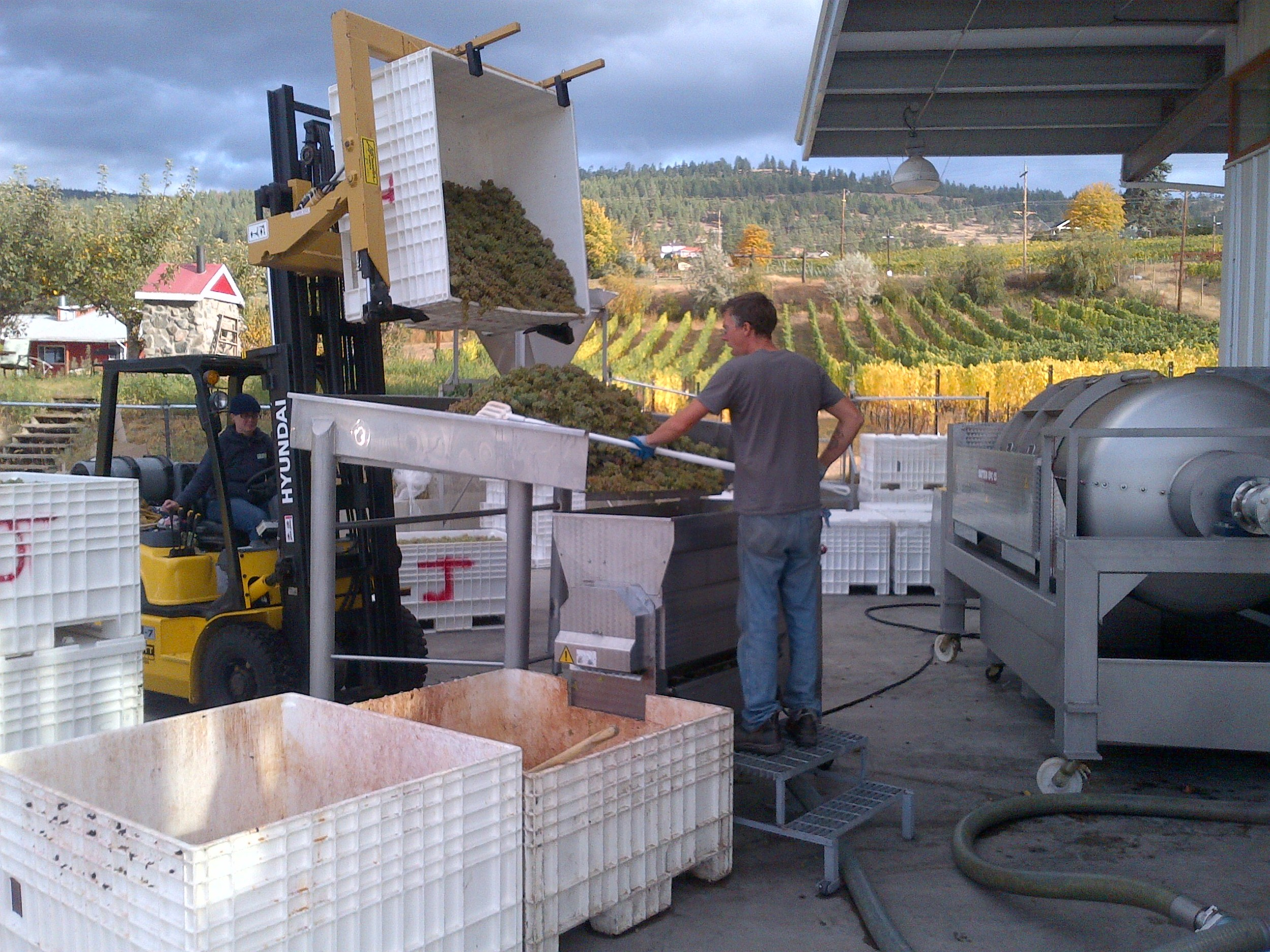 Heidi and Jon-Rae bringing in Riesling to de-stem and crush.
