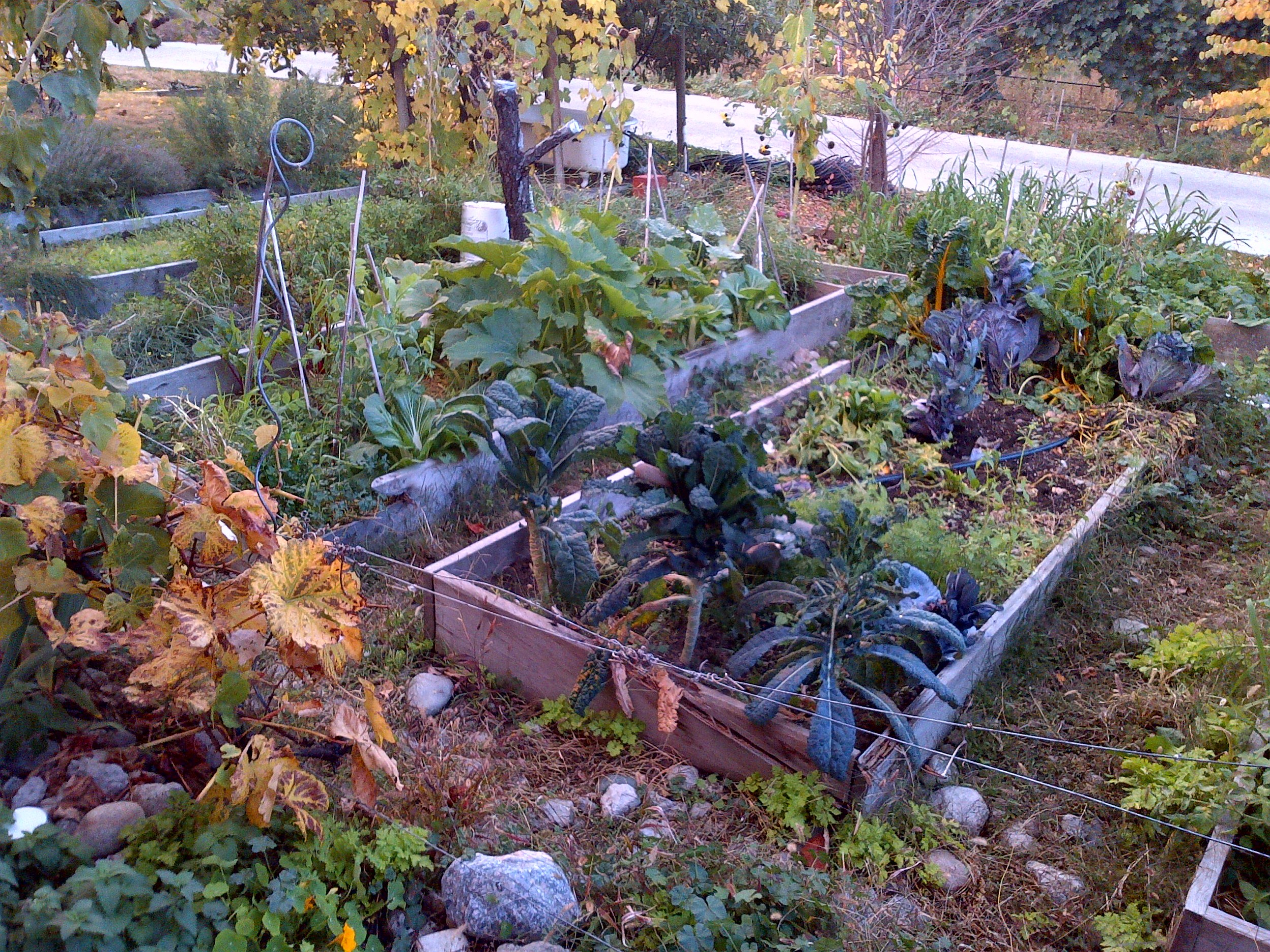 Heidi's vegetable garden