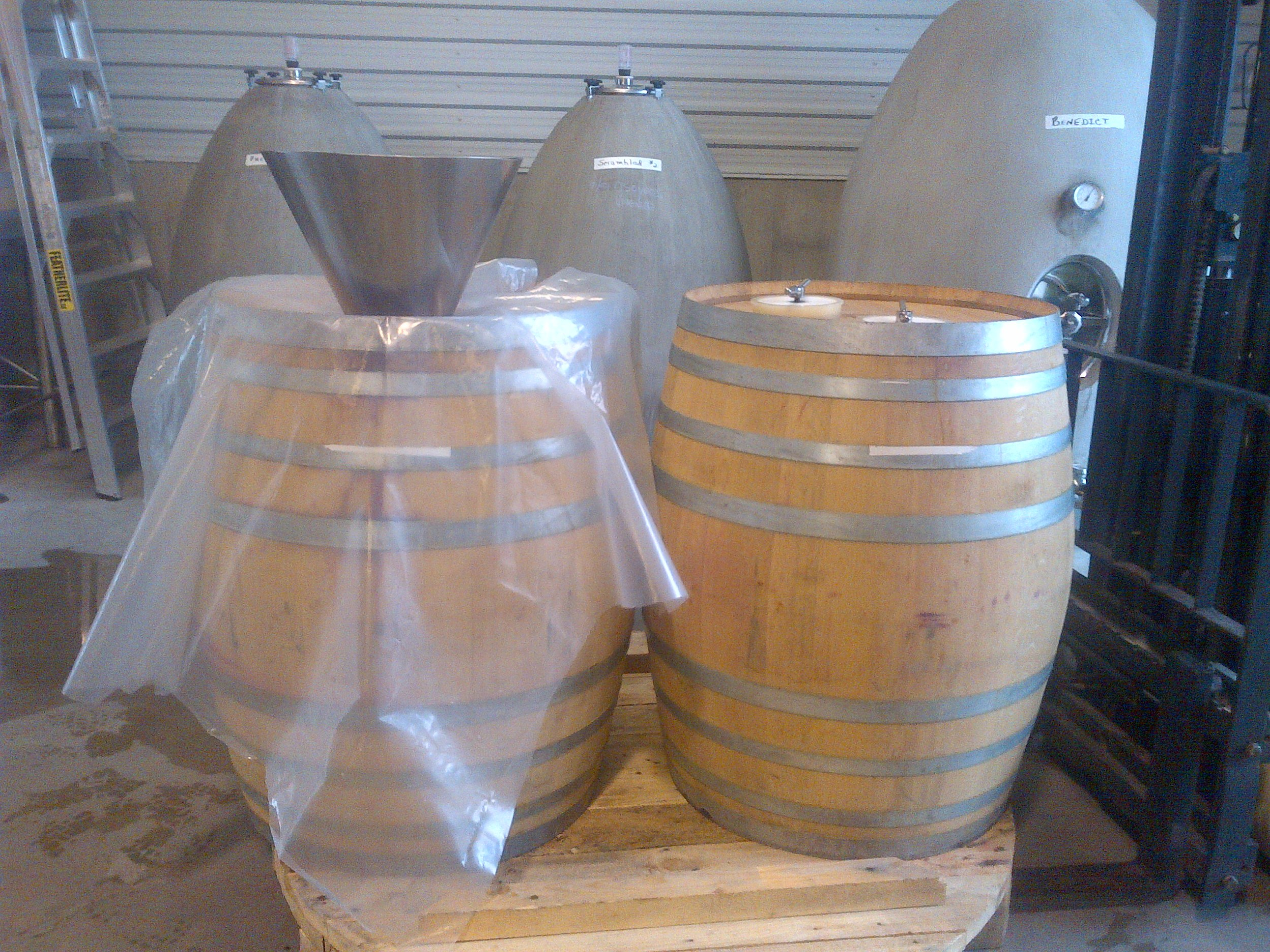 Barrels ready for filling with Malbec for fermentation after a cold soak in bins after de-stemming...