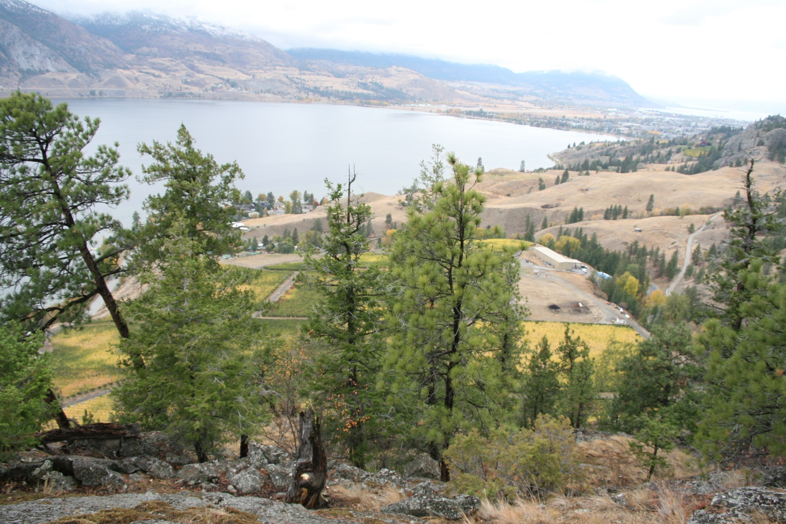 The view down over the vineyard from atop the bluffs. You can see Penticton and Lake Okanagan in the distance to the north.