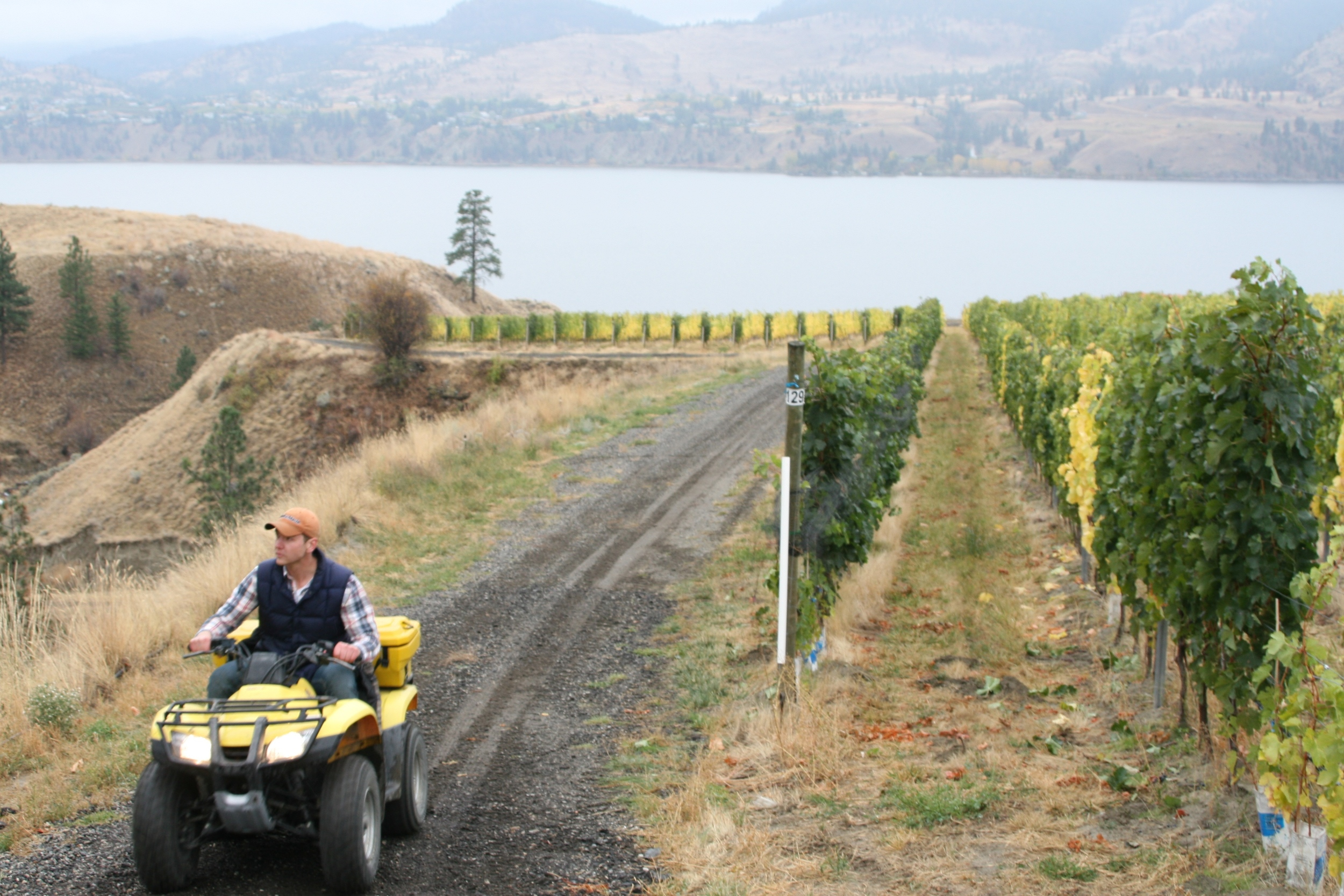 Touring the vineyard on an ATV