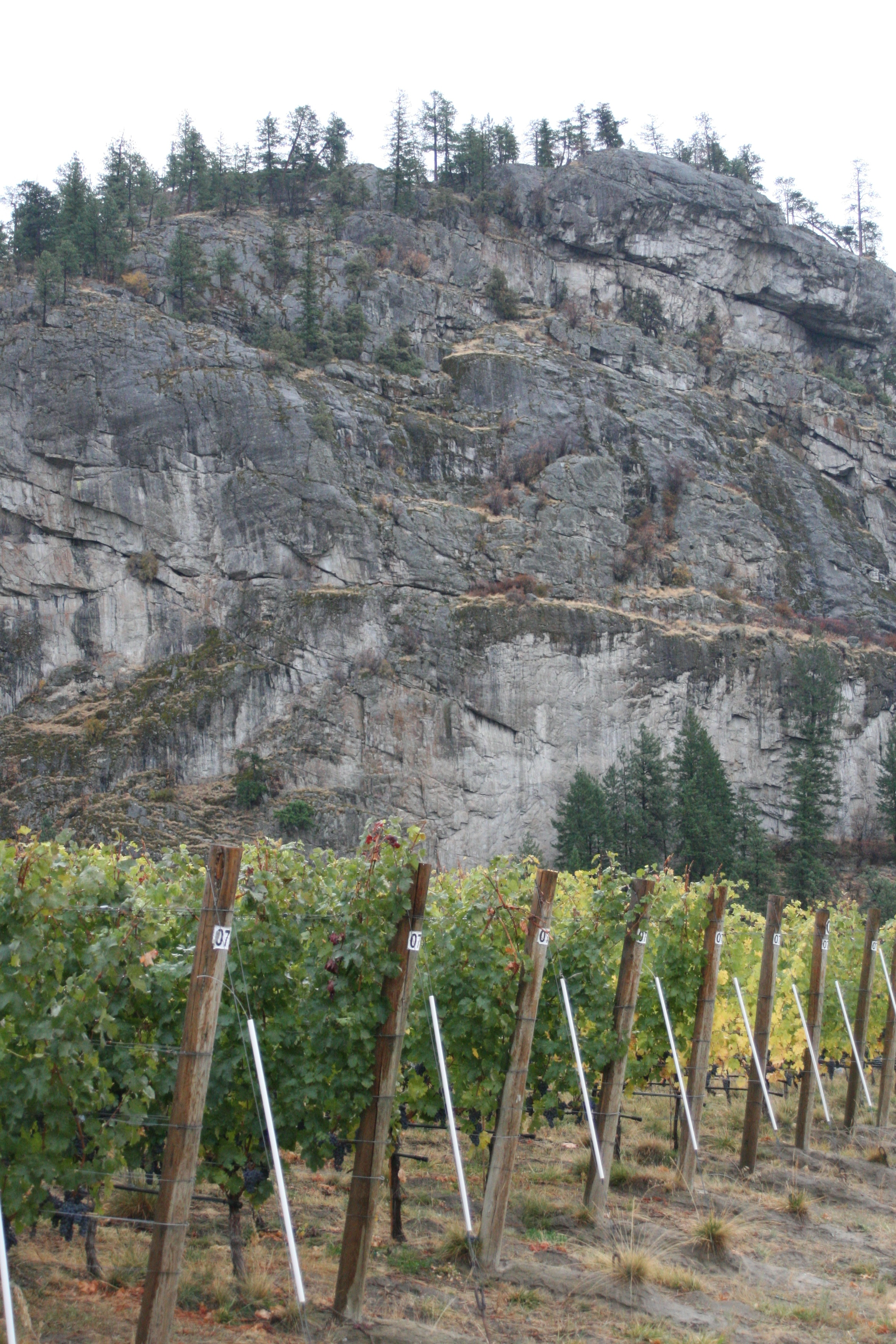 Vineyard against the rock wall of the Skaha Bluffs