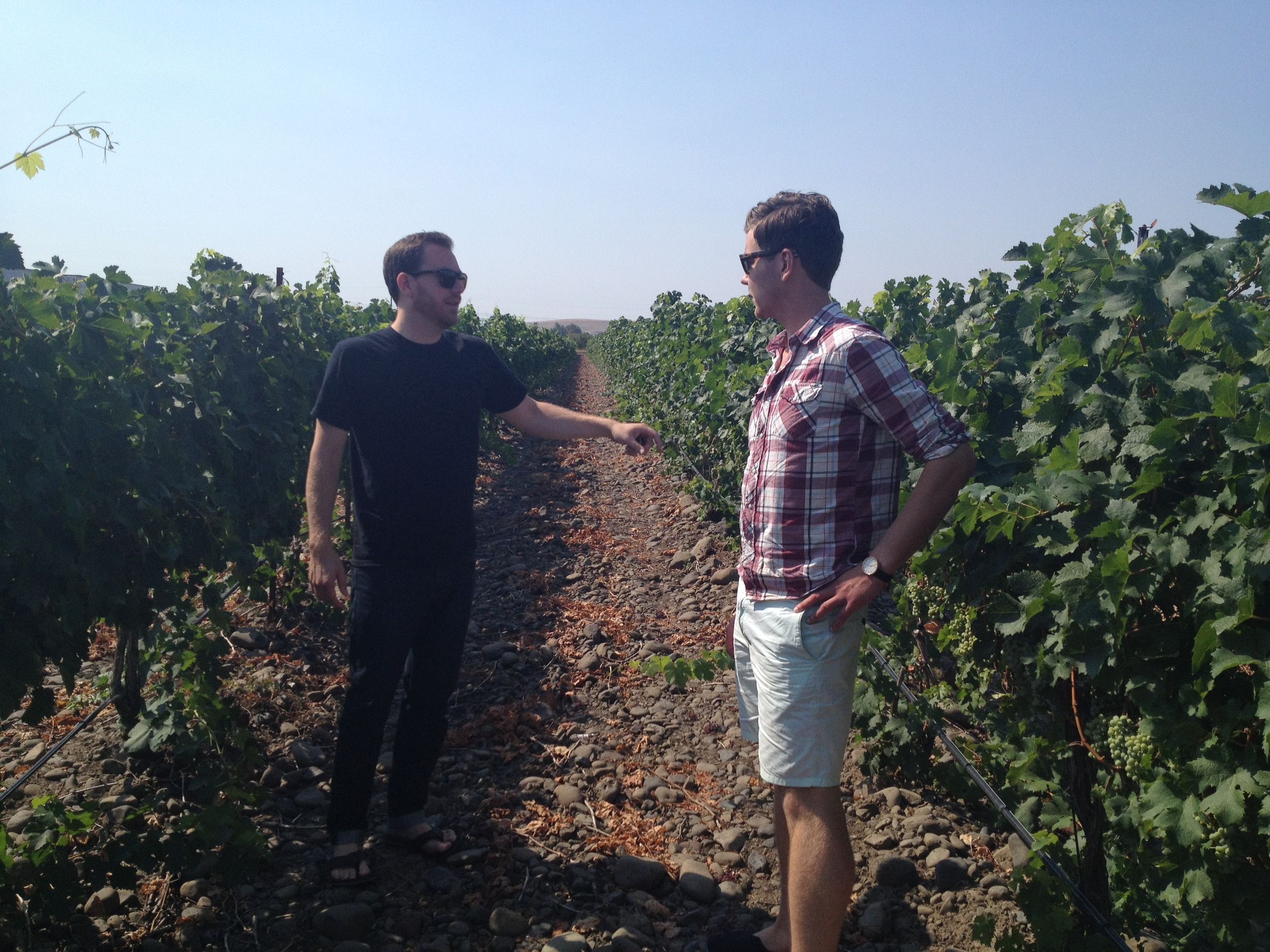 Checking out the rocks vineyard Syrah with Andrew Latta.