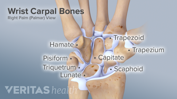 https://www.sports-health.com/sports-injuries/hand-and-wrist-injuries/guide-wrist-anatomy