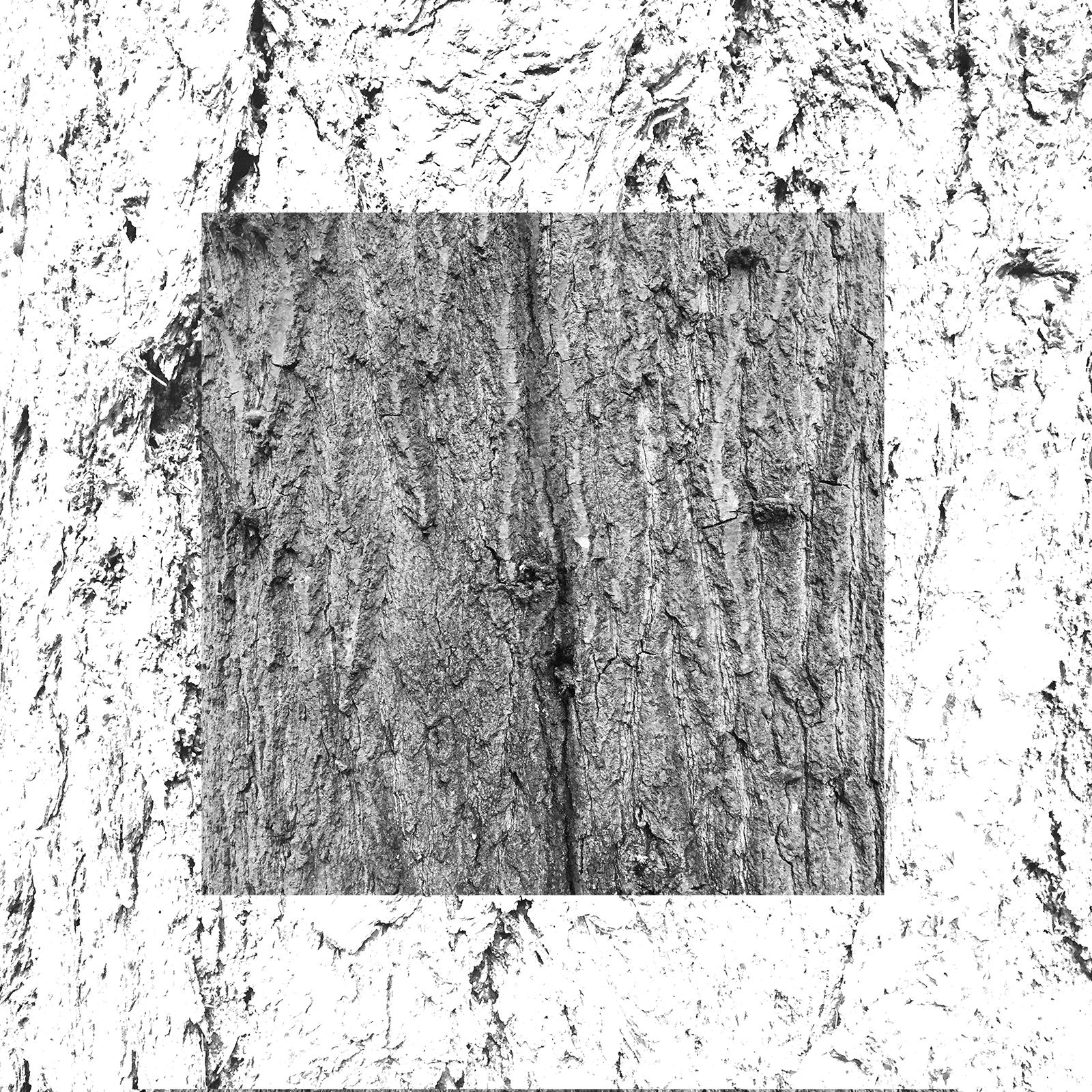 white-11.jpg