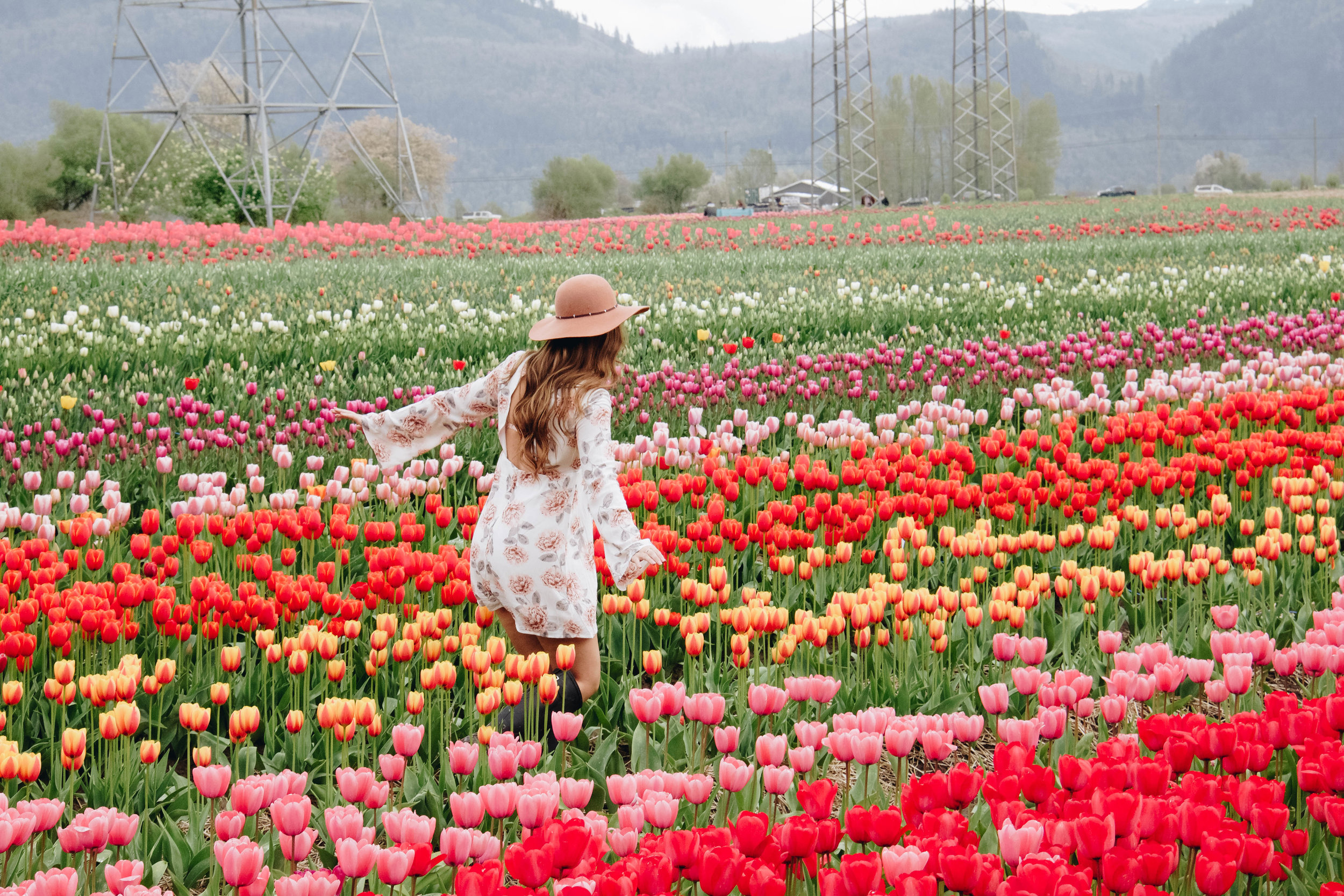 The Abbostford Tulip Festival ~ Photo:  Bailey Marshall
