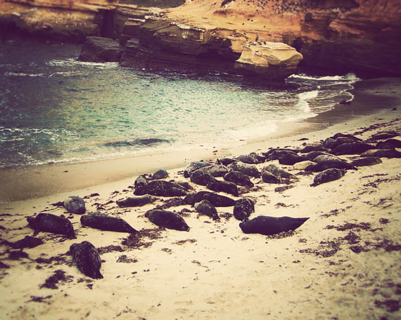 sea lions_web.jpg