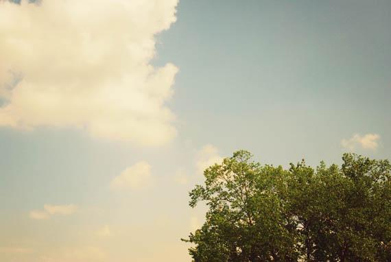 tree_web.jpg