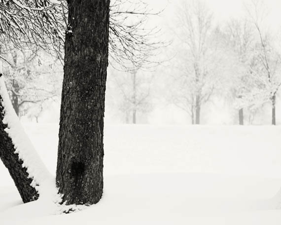 snow3 web.jpg