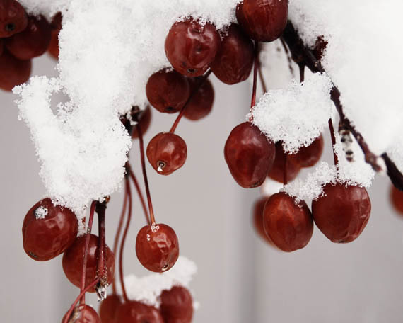 winter berries_web.jpg