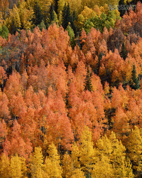 Have you ever seen a hillside so ablaze with color??