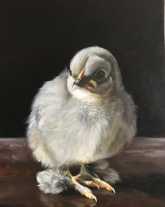 "One more 12"" x 16"" chick painting. #karljahnke #art#painting #contemporaryart #artist #oilpainting #chickenpainting #chickenart #chickenartwork #artwork #birdpainting"
