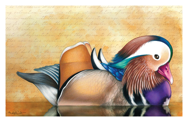 """MANDARIN DUCK"" BY MARY WILLIAMS"