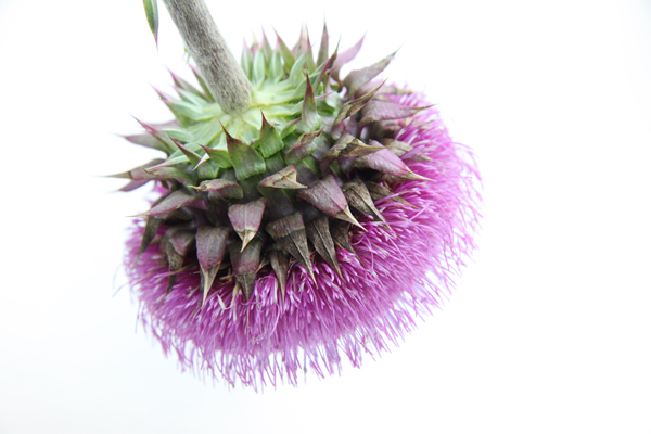 thistle copyshop.jpg