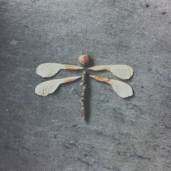 """Dragonfly"" by Brock Davis"