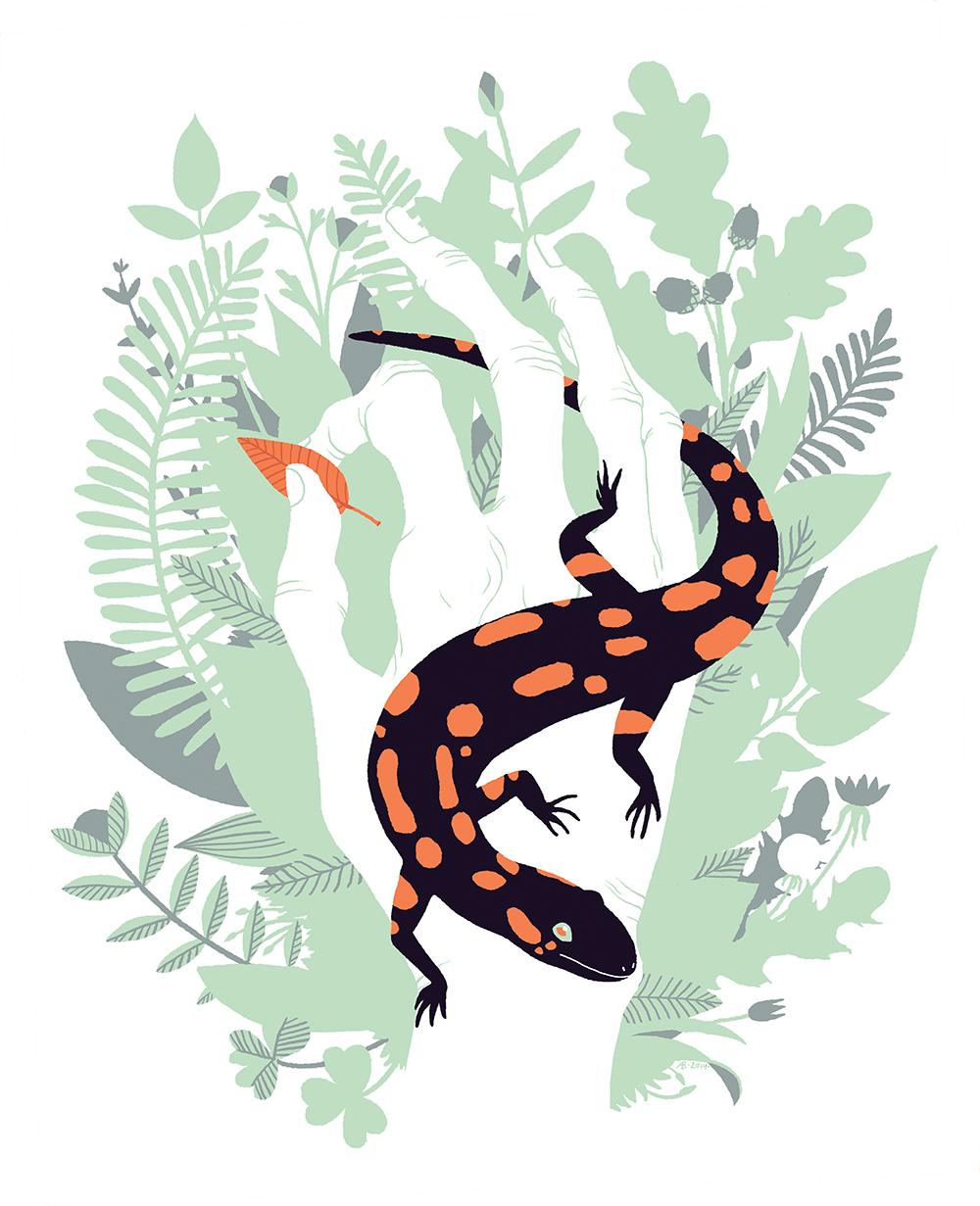 """""Fire Salamander"" by Anine Bösenberg"""