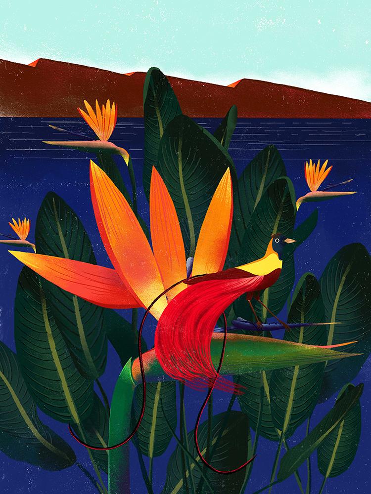 """Bird of Paradise"" by Decue Wu"