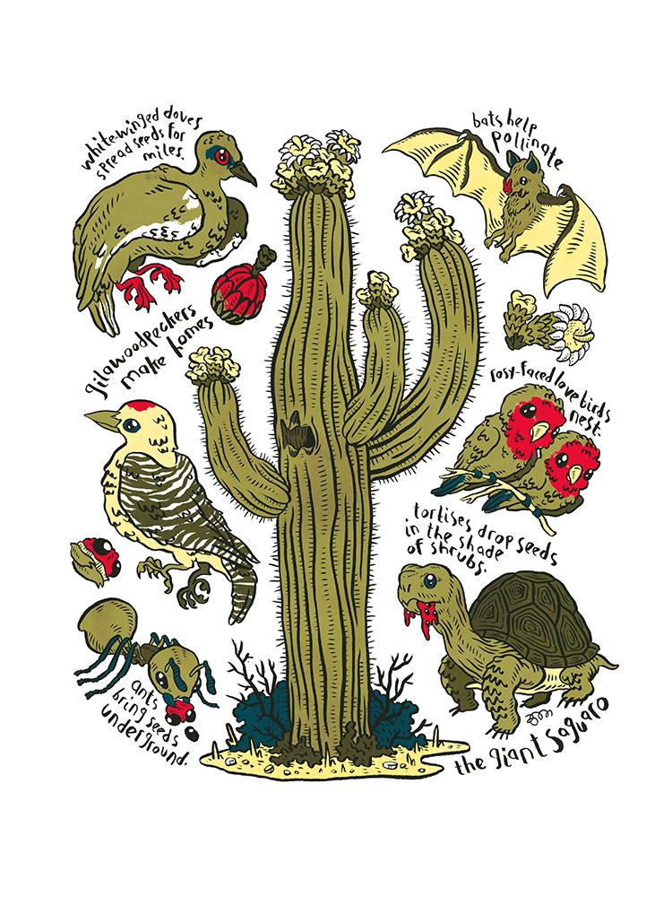 """""""The Giant Saguaro"""" by Brett Martin"""
