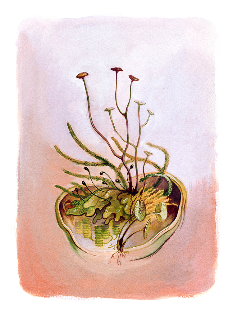 """""""Portrait of Early Paleozoic Plants"""" by Mary Sanche"""