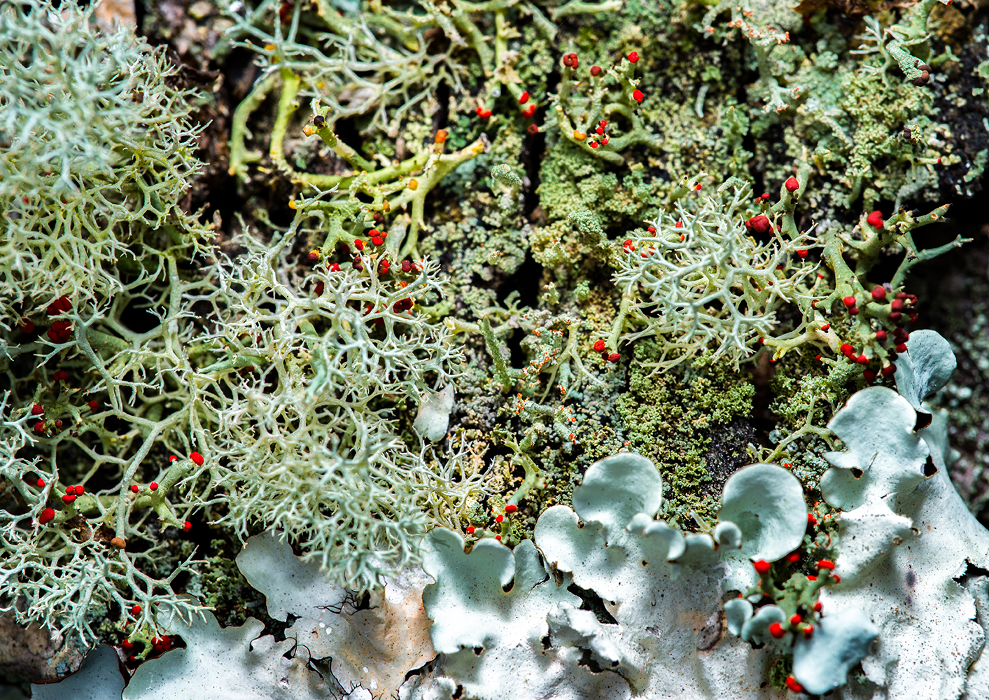 """""""Lovely Lichens"""" by Matthew Cicanese"""