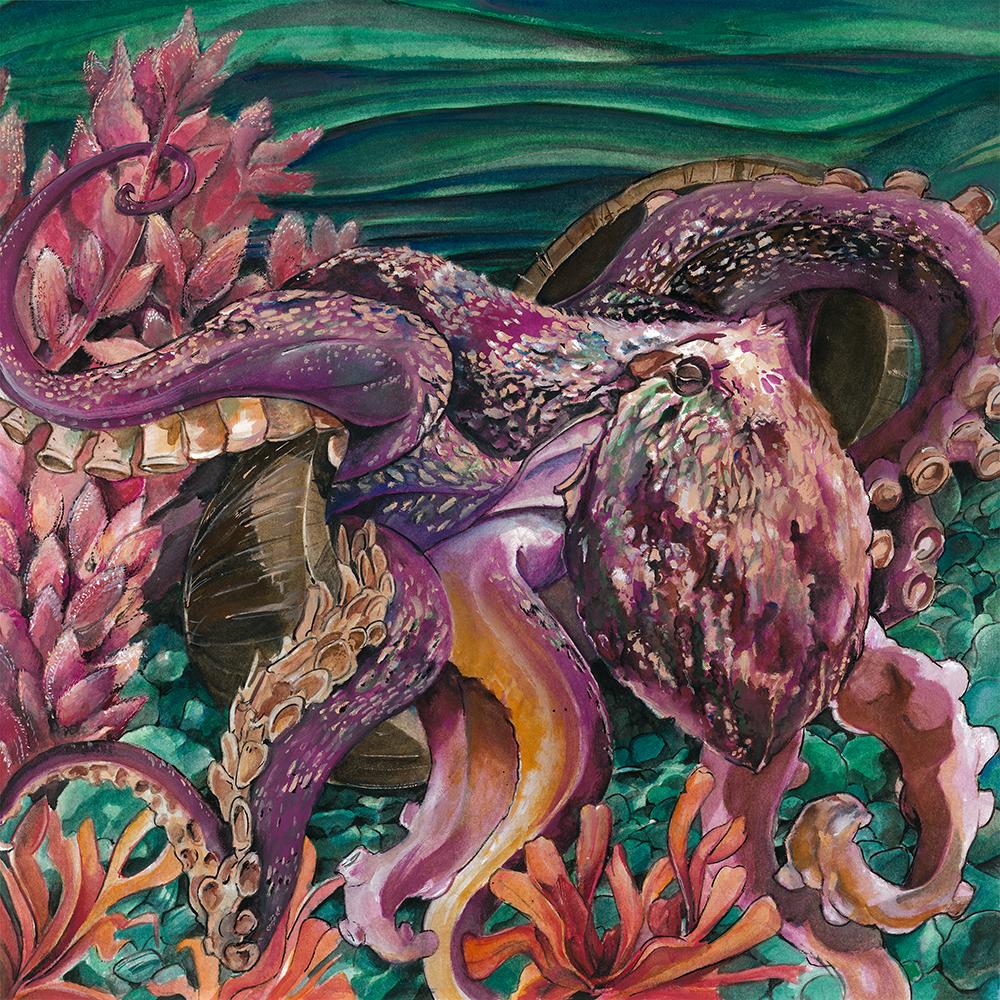 """The Coconut Octopus (Amphioctopus marginatus)"" by Jay Rasgorshek"
