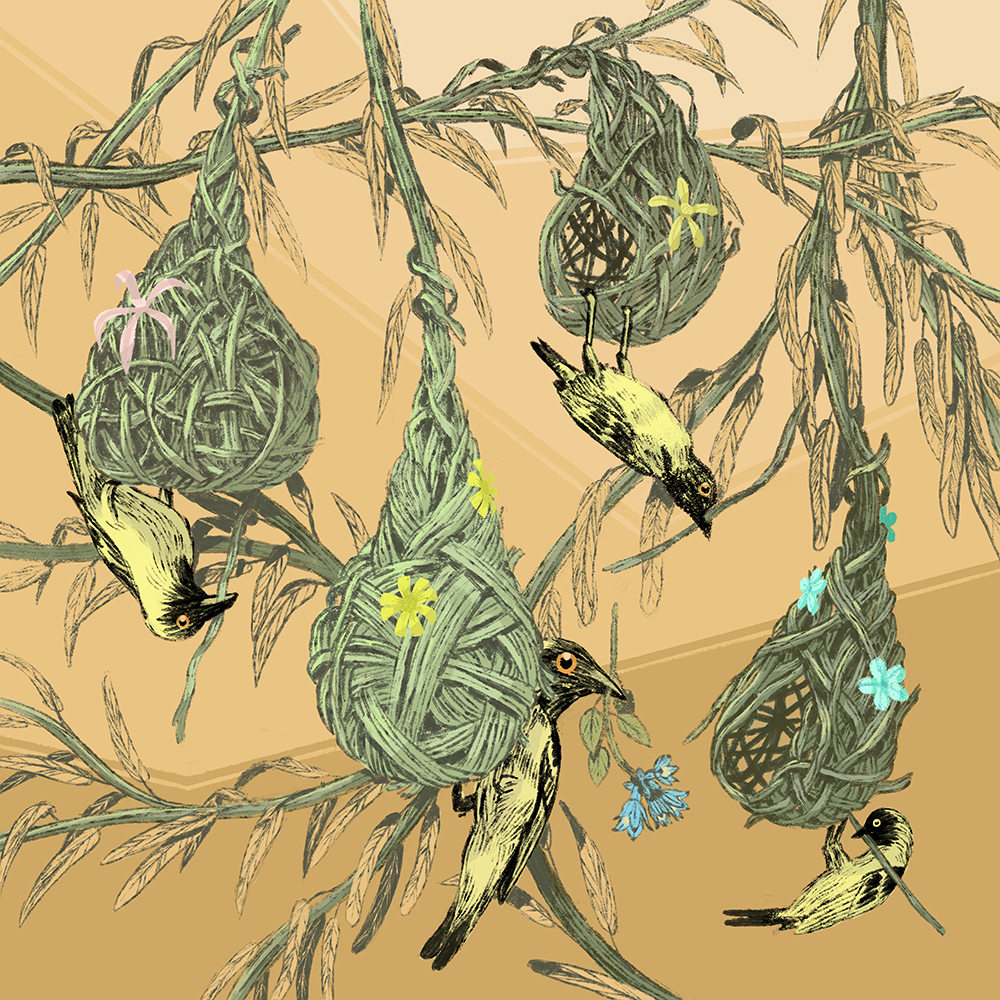 """Weaver Finches"" by Jon Marchione"