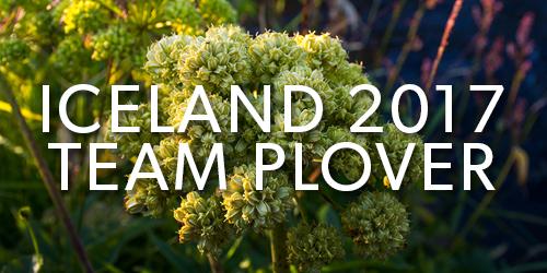 Iceland-2017-Team-Plover-Button.jpg