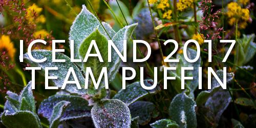 Iceland-2017-Team-Puffin-Button.jpg