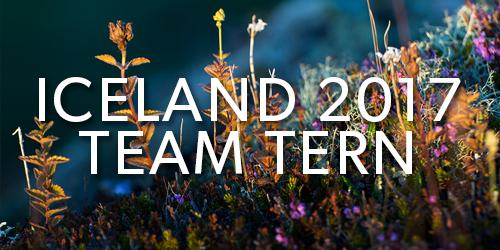 Iceland-2017-Team-Tern-Button.jpg