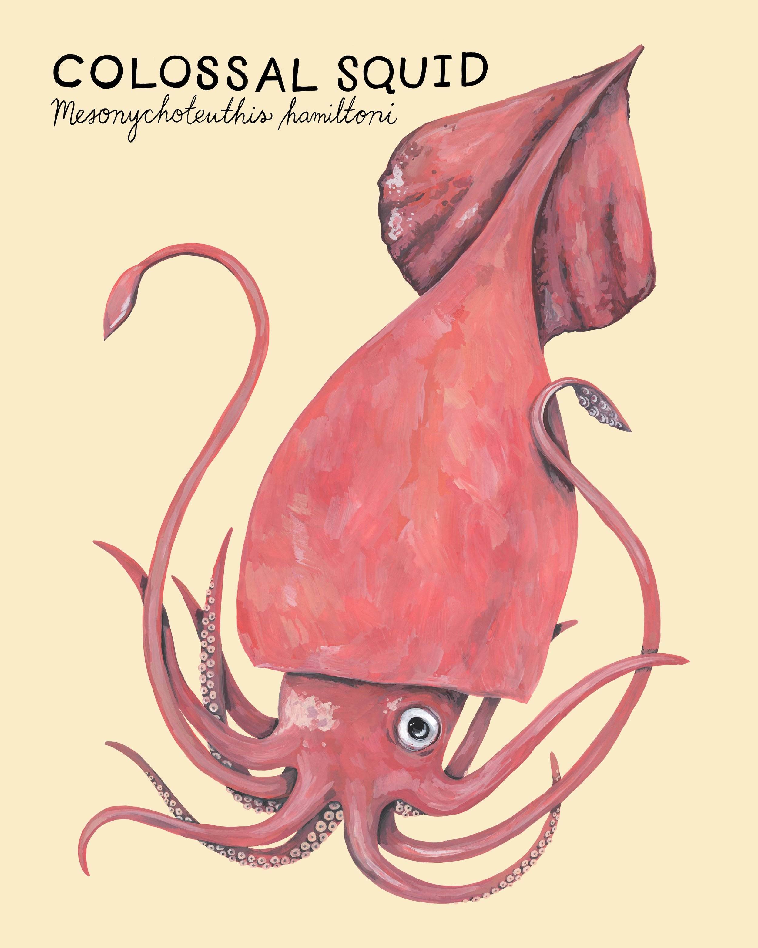 colossal squid.jpg