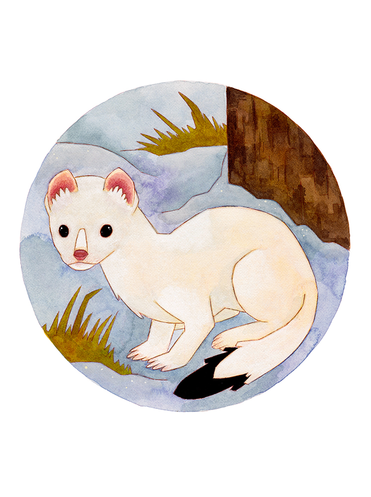 """Stoat and Ermine"" – Matt Hayton"