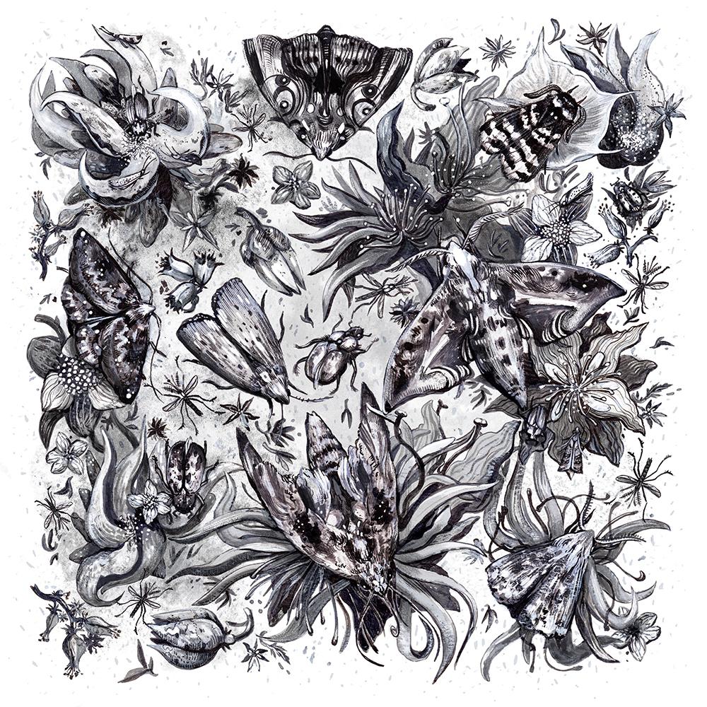 """""""Nocturnal Pollinators"""" by Christina Rycz"""