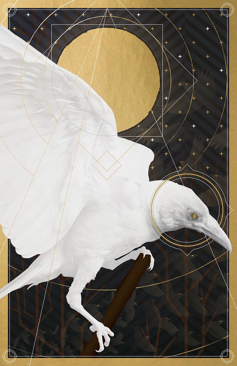 """Leucistic Corvus Corax"" by Thomas Wiener"
