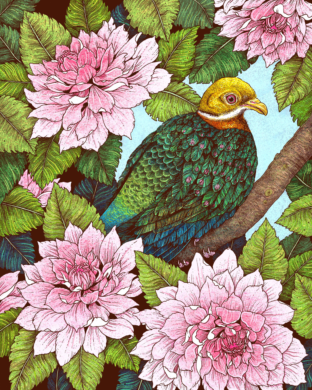 """""""Whistling Fruit Dove In Spring"""""""