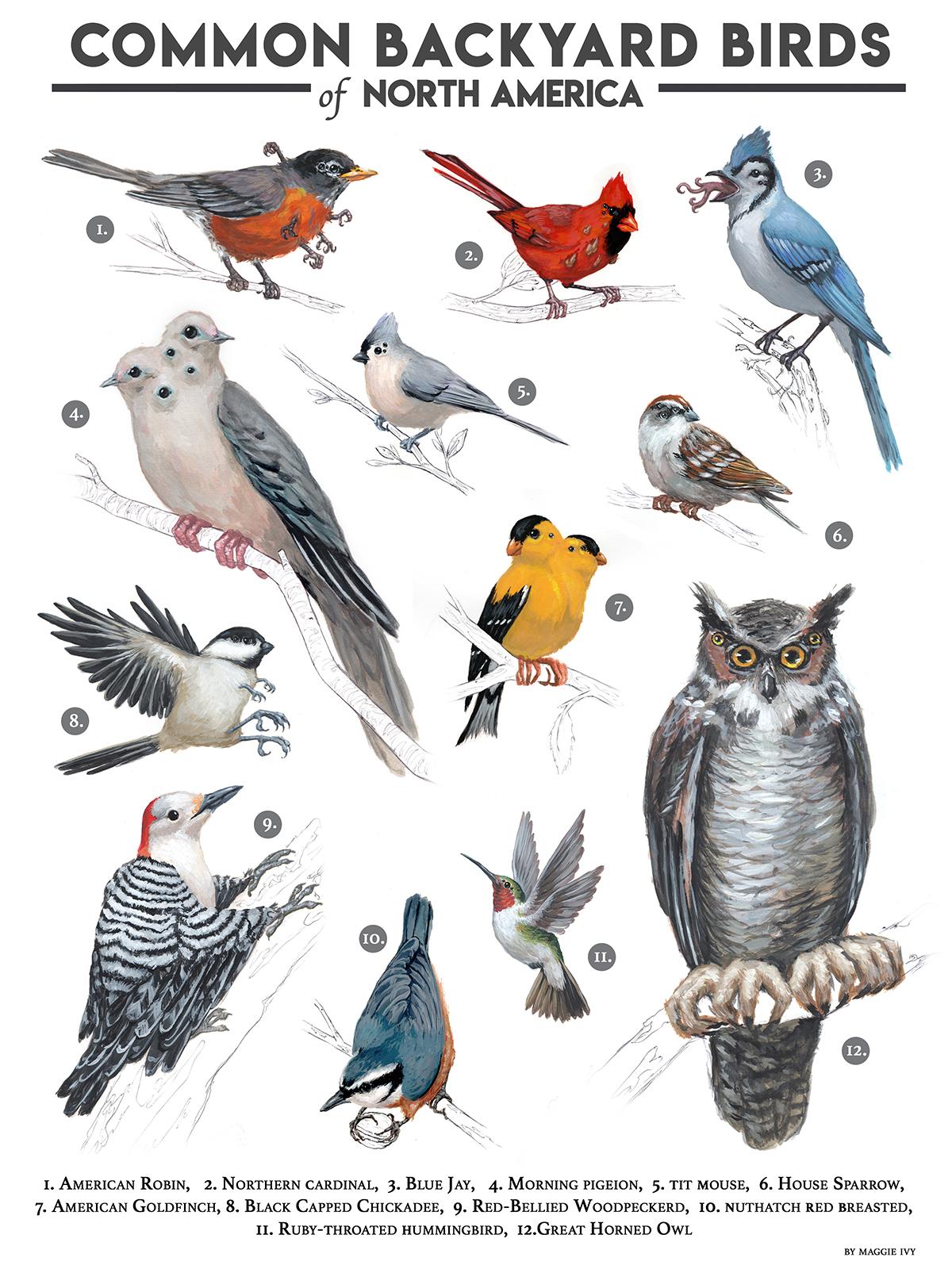 """Common Backyard Birds Post WW3"""