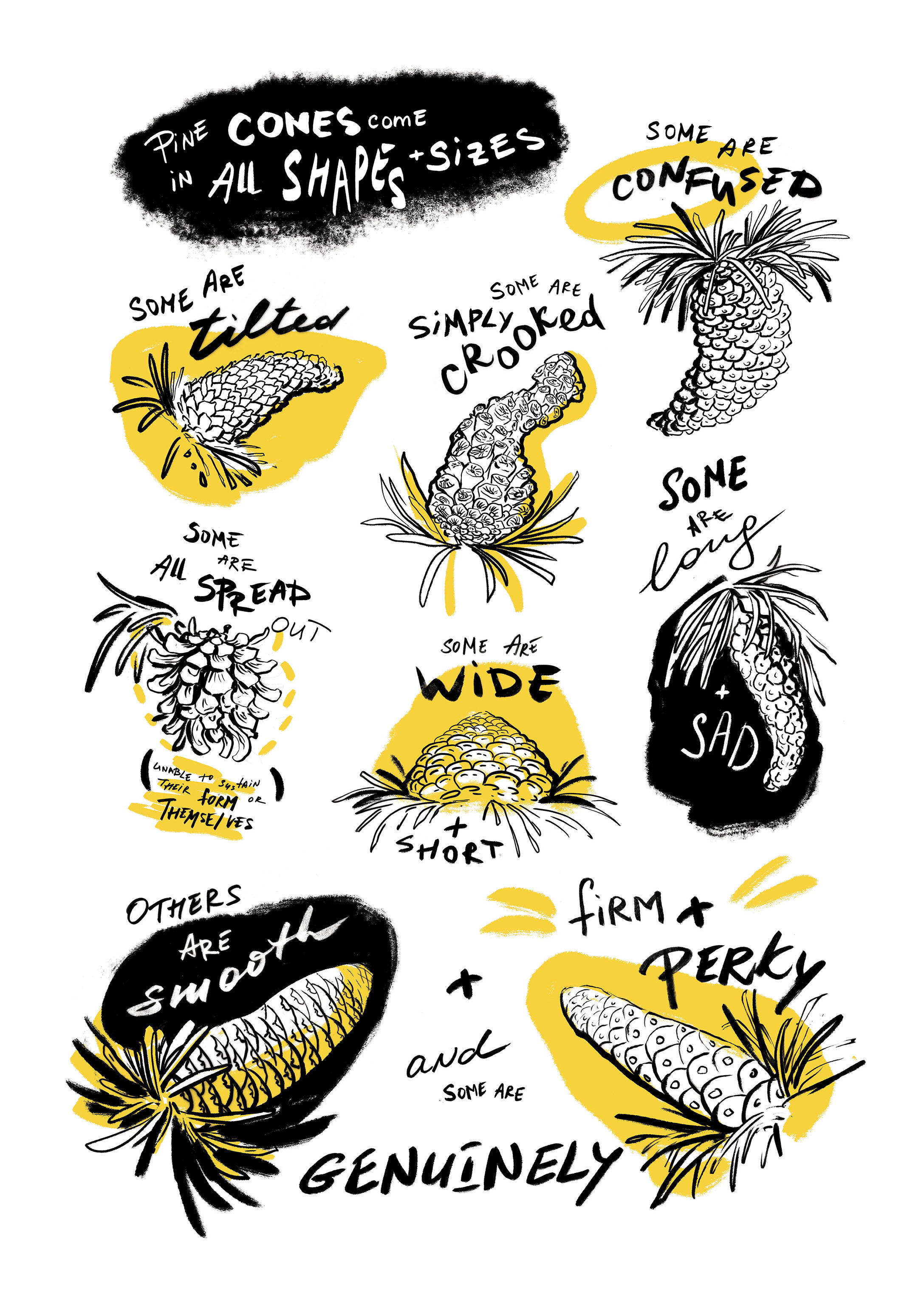 A Guide to Pine Cones