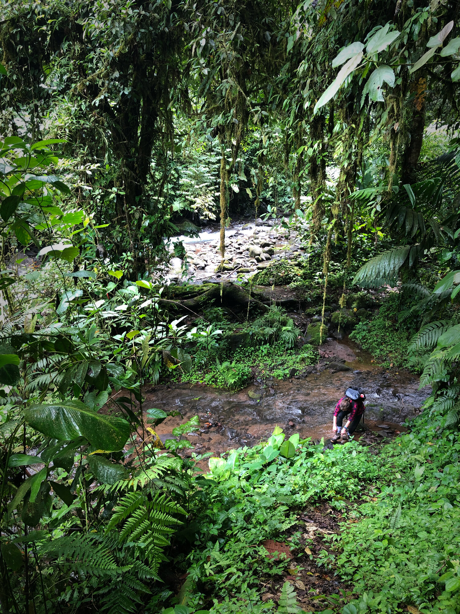 Explore private trails through the jungle and view hummingbirds, frogs, and butterflies in their element