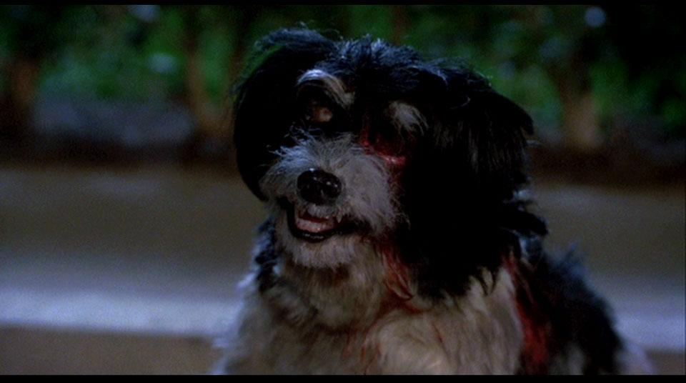 Bad puppy!!