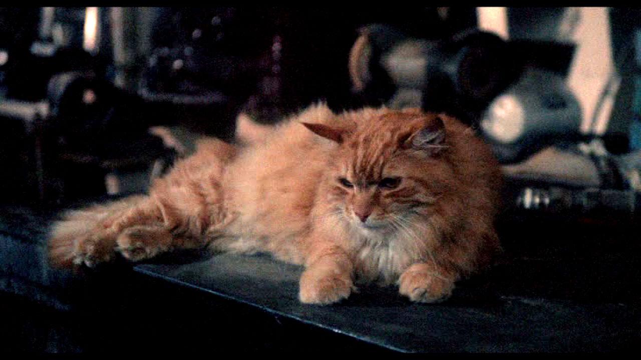 Soft kitty, warm kitty, little ball of death…