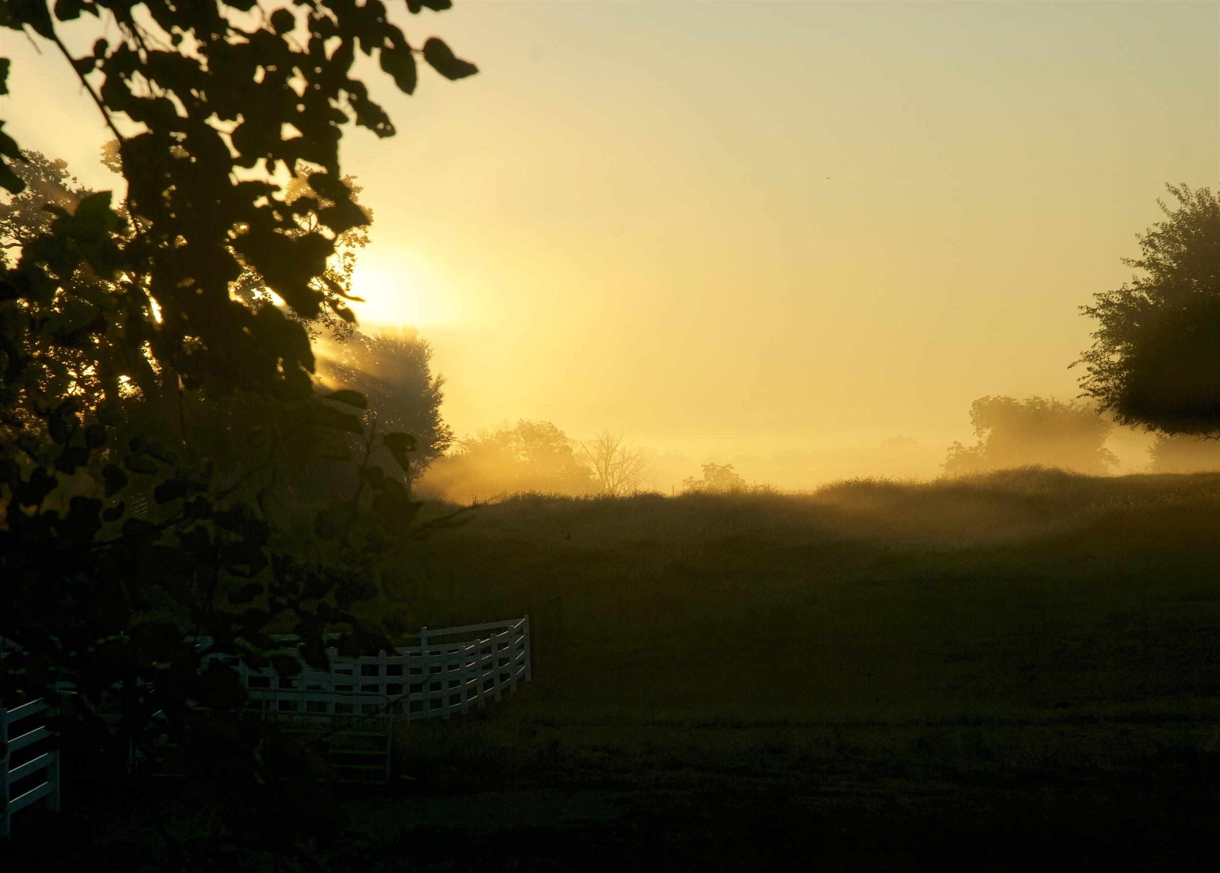 Field Fog, August 2011