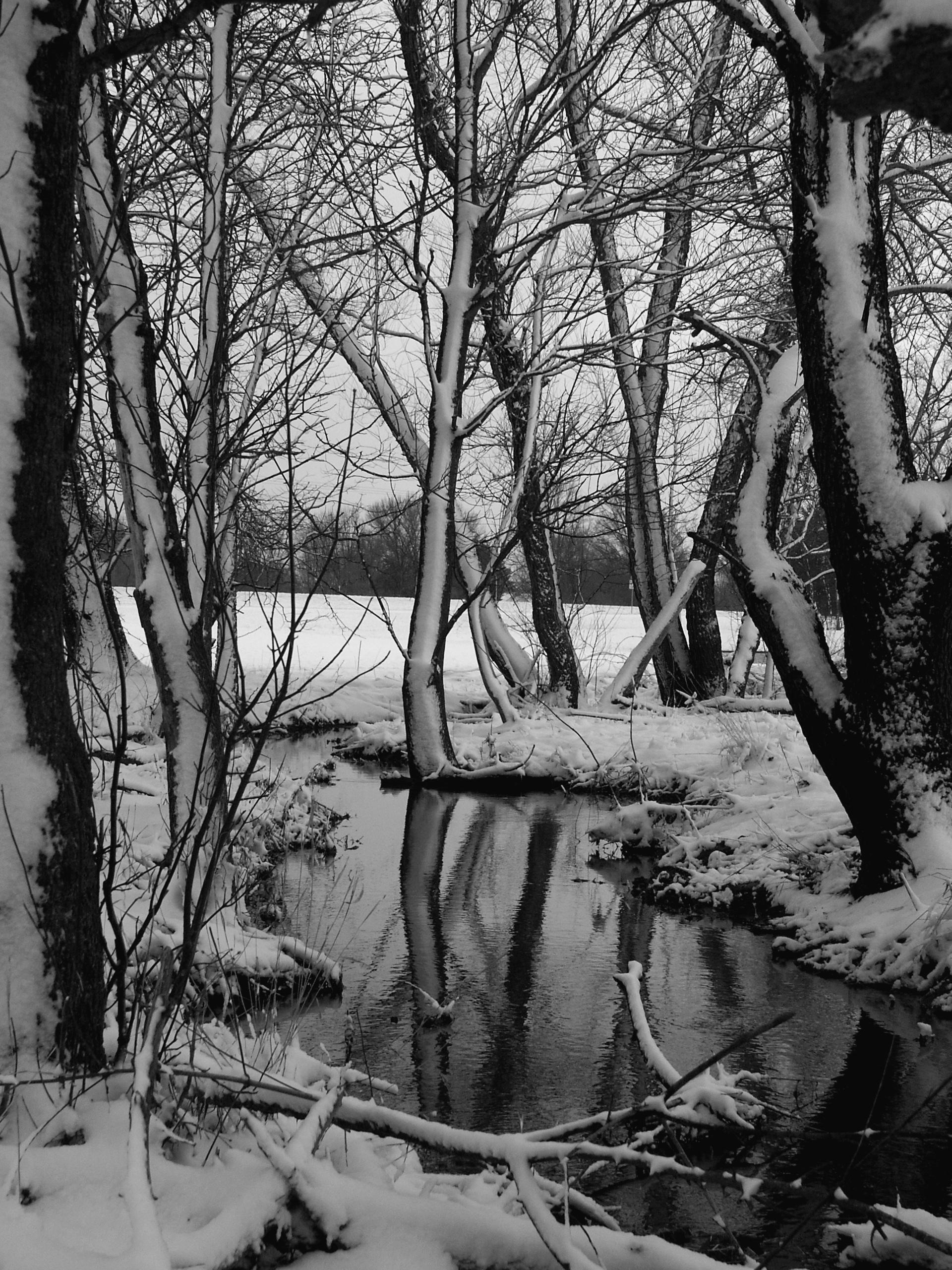 Black & White Slew, January 2005