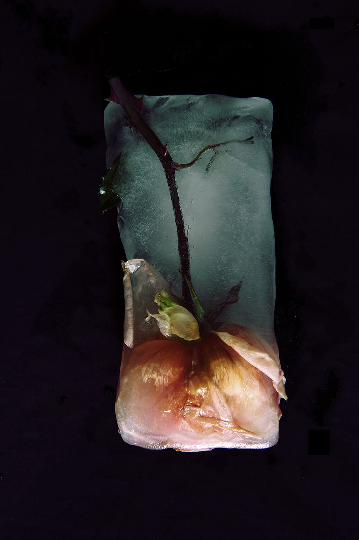 Frozen Roses - Thinh Dong